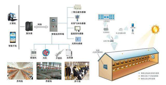 What are the environmental detection sensors of intelligent pig farm?